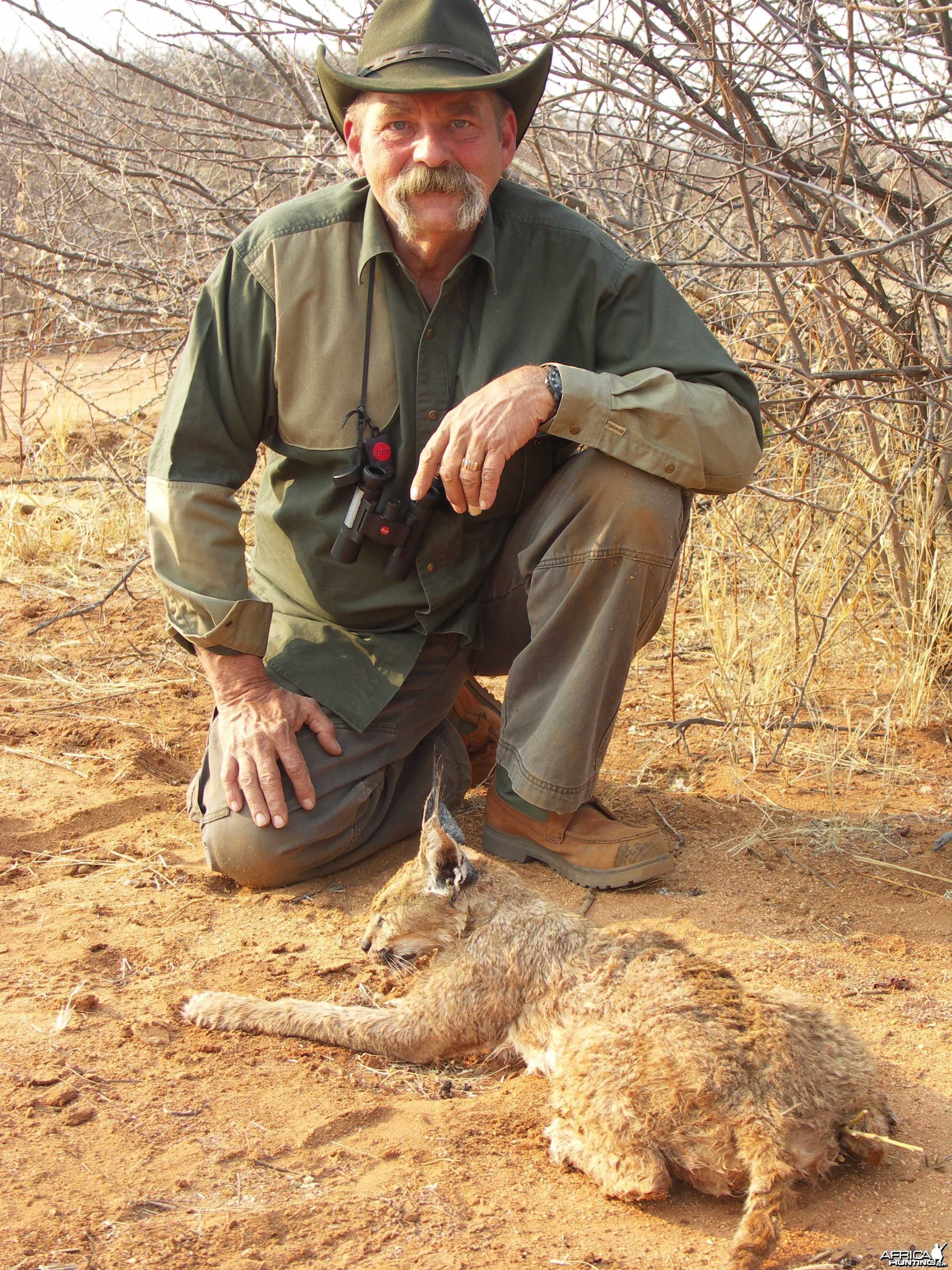 Caracal Hunting in Namibia