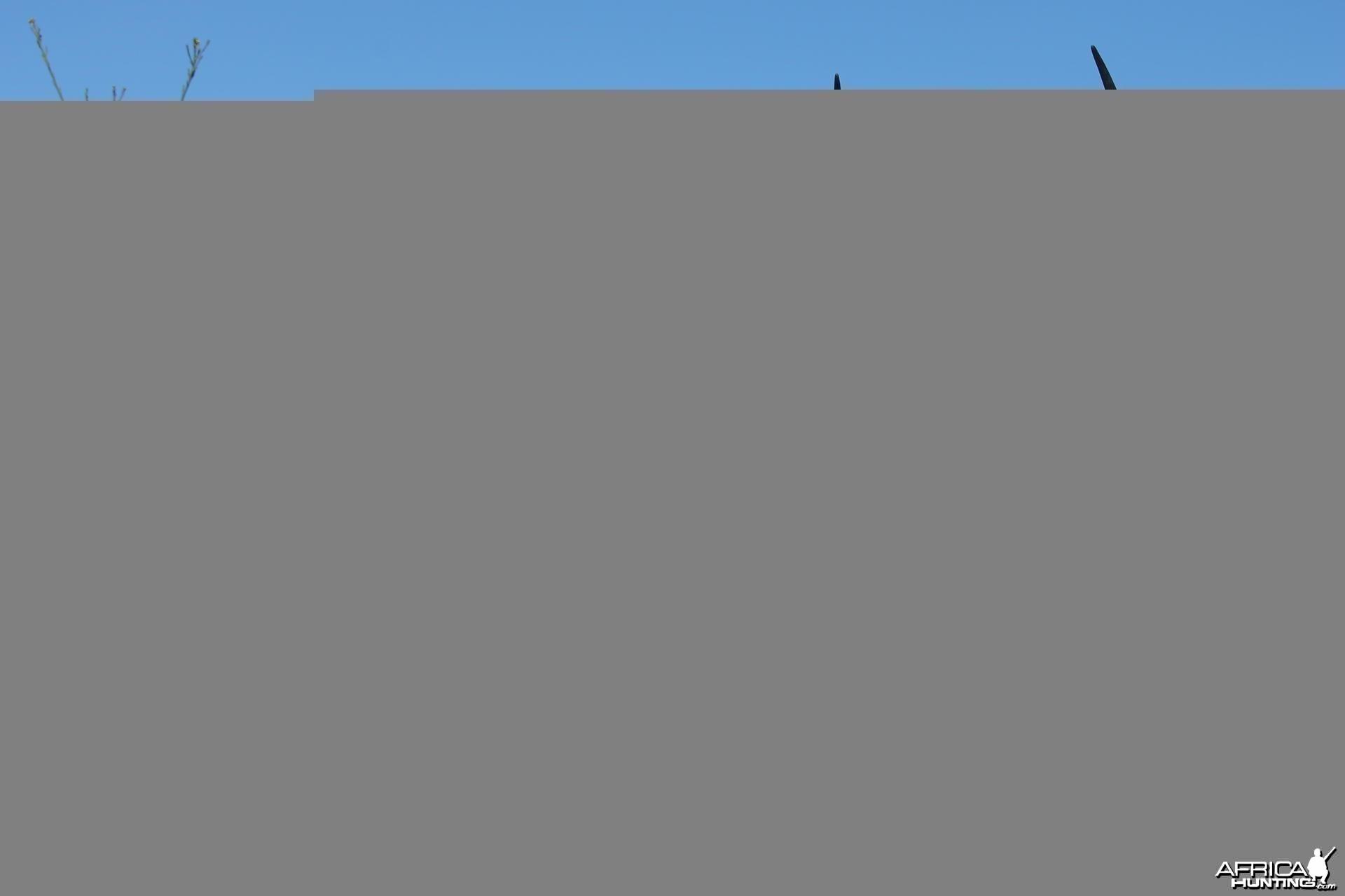 Impala taken with Cape Valley Safaris