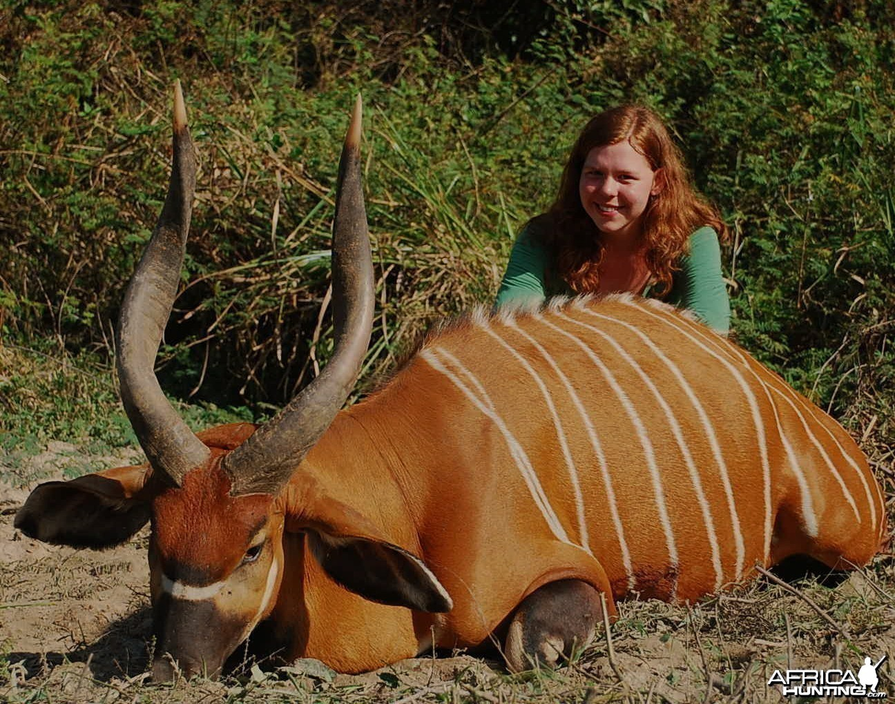 29 inch bongo hunted in CAR with Central African Wildlife Adventures