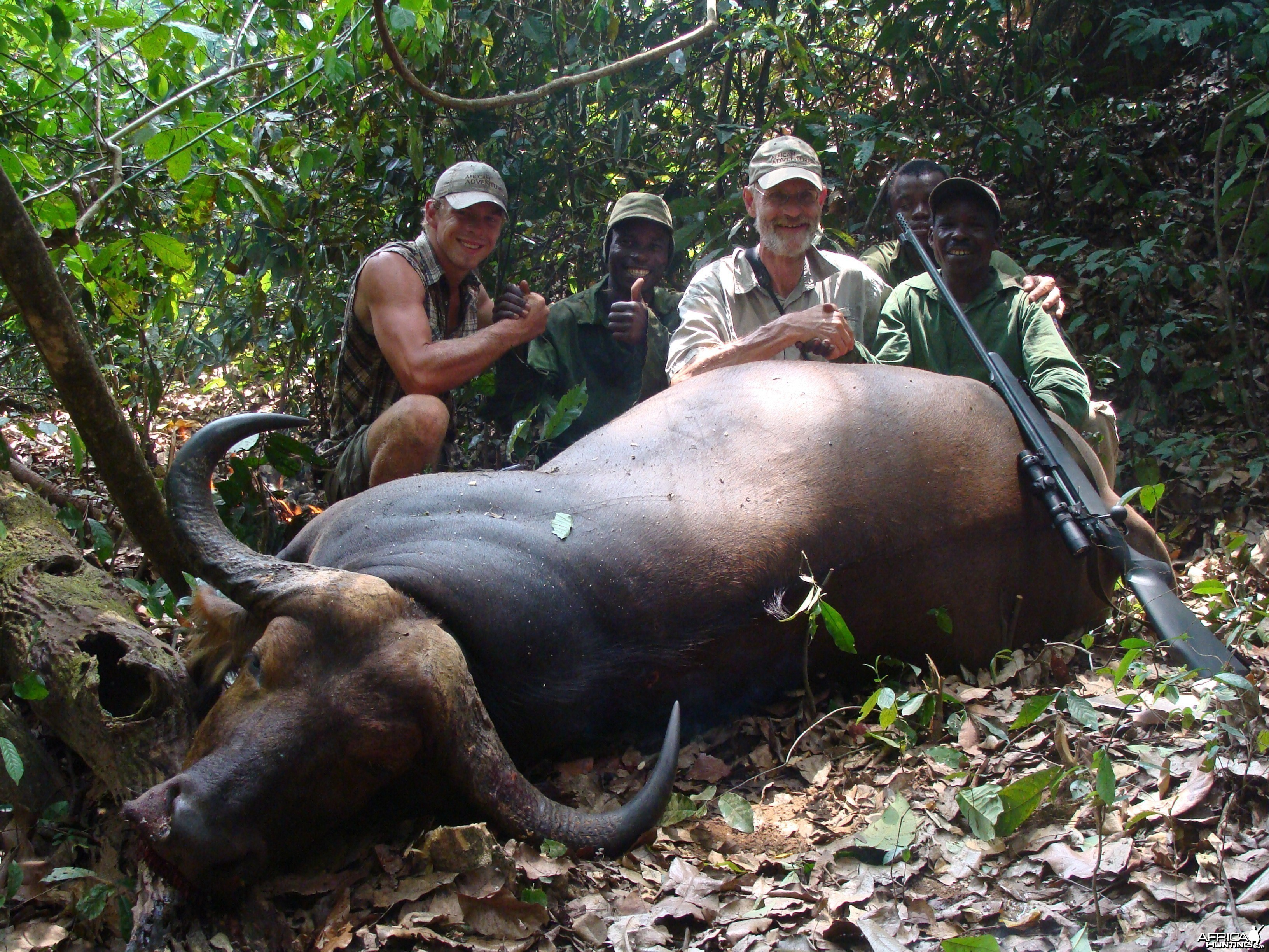 35 inch spread Buffalo hunted in CAR with Central African Wildlife Adventur