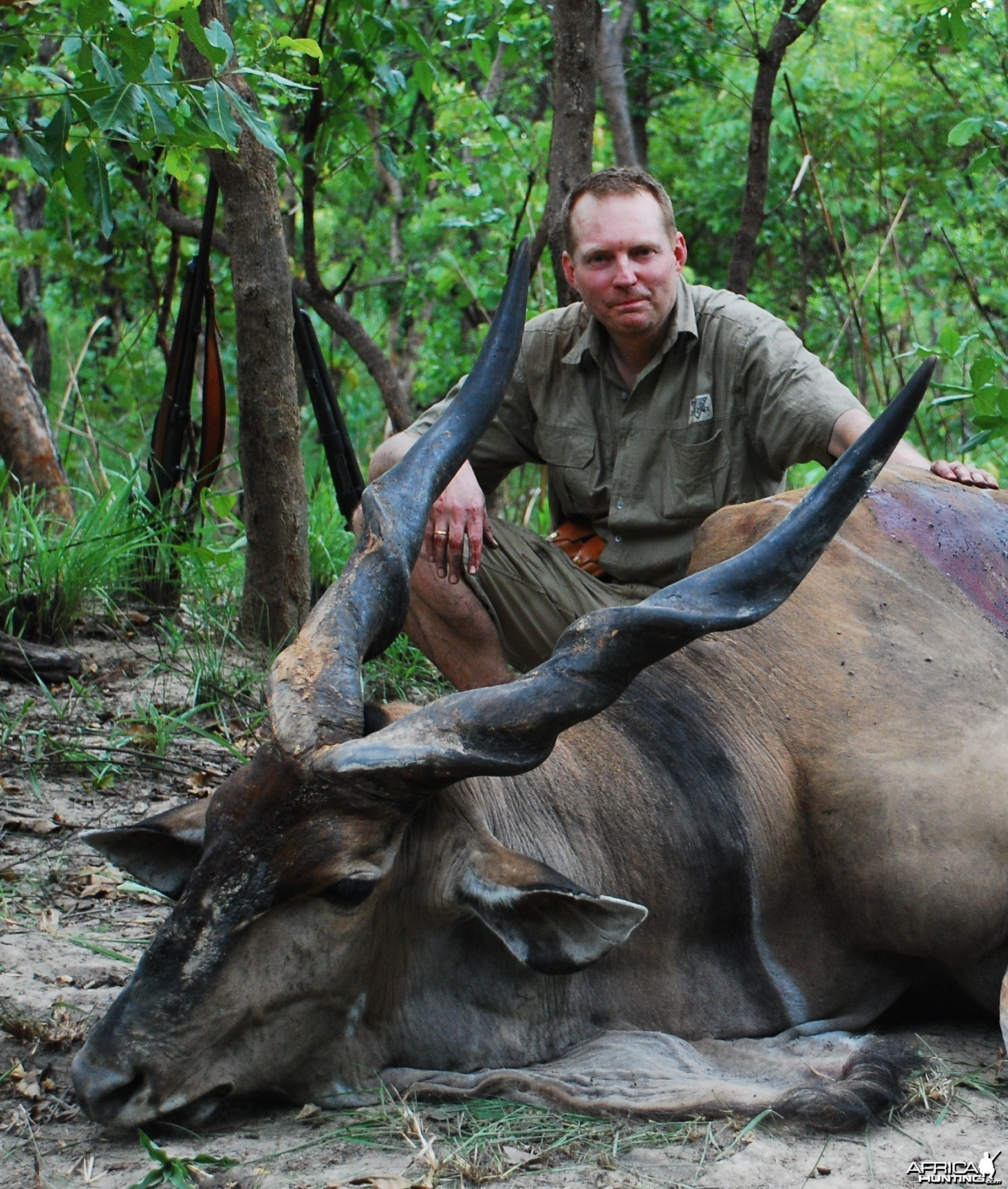 48 inch Eland hunted in CAR with Central African Wildlife Adventures