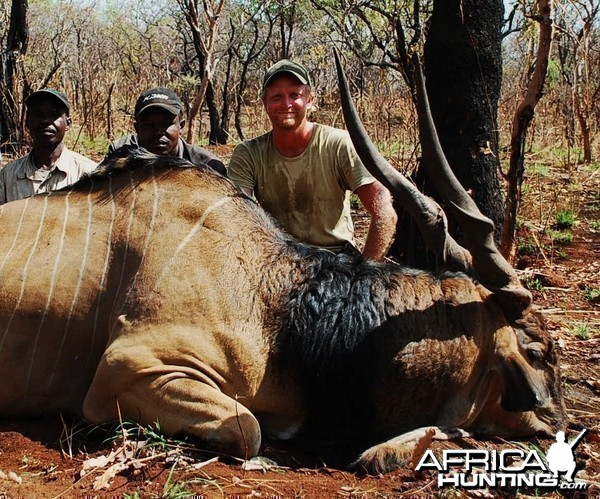 49.5 inch Eland hunted in CAR with Central African Wildlife Adventures