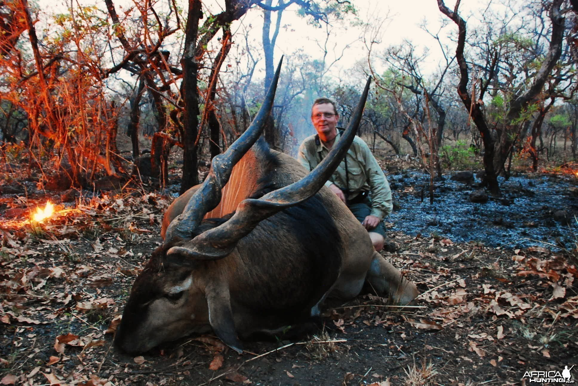 50 inch Eland hunted in CAR with Central African Wildlife Adventures