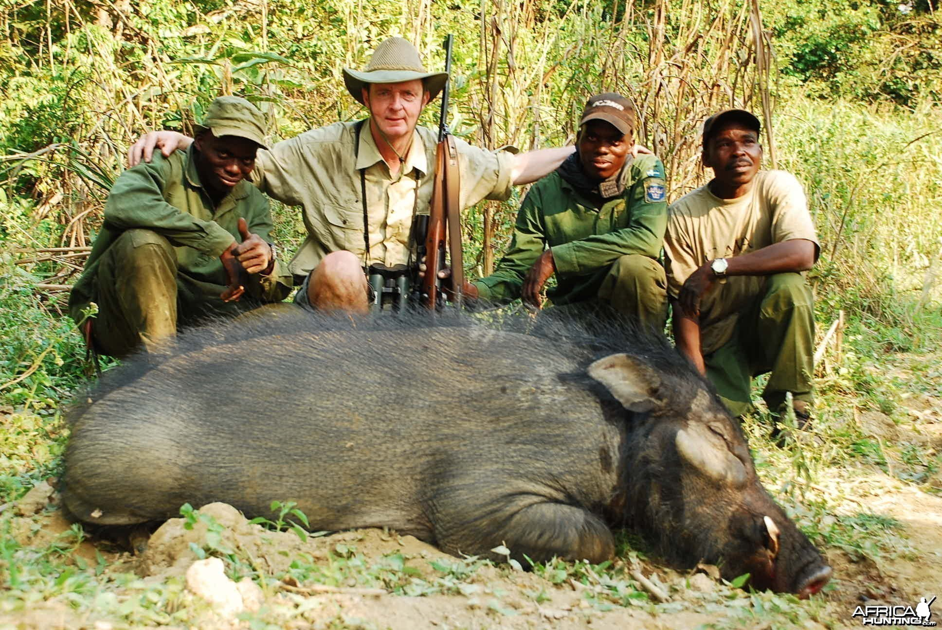 Giant Forest Hog hunted in CAR with Central African Wildlife Adventures