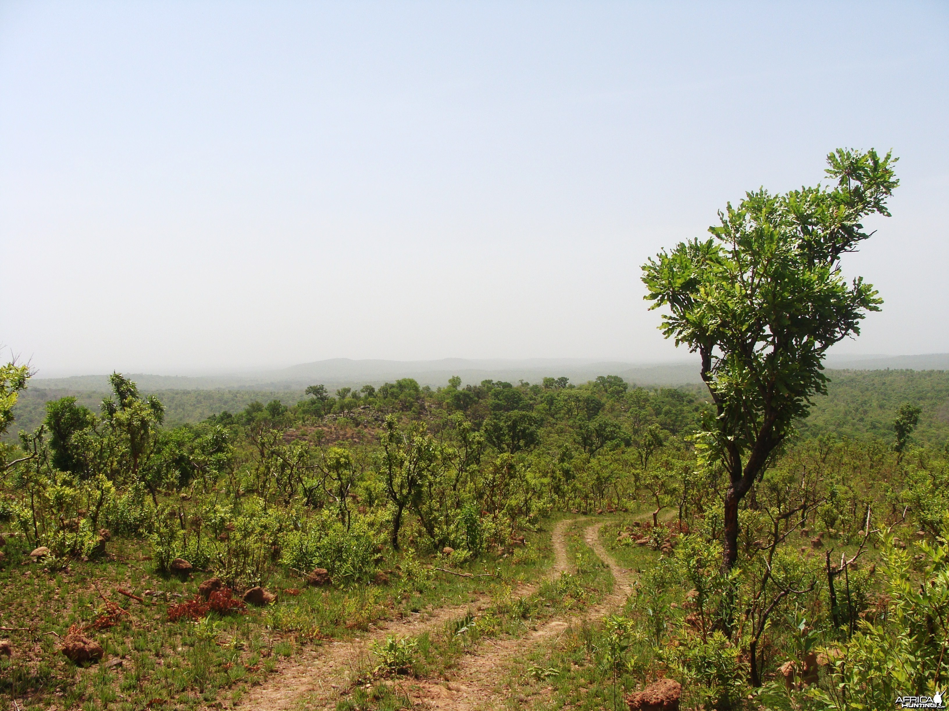 Kocho area in CAR with Central African Wildlife Adventures