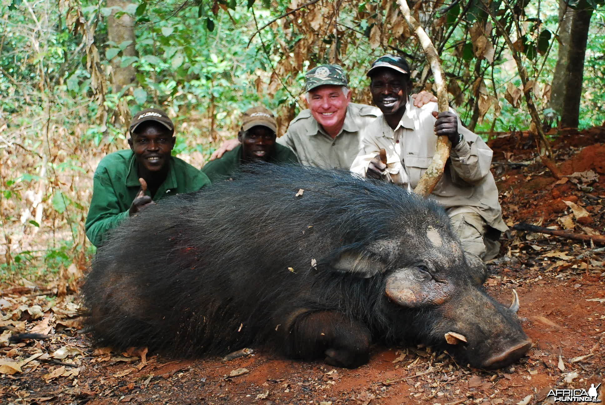 Old Giant Forest Hog hunted in CAR with Central African Wildlife Adventures