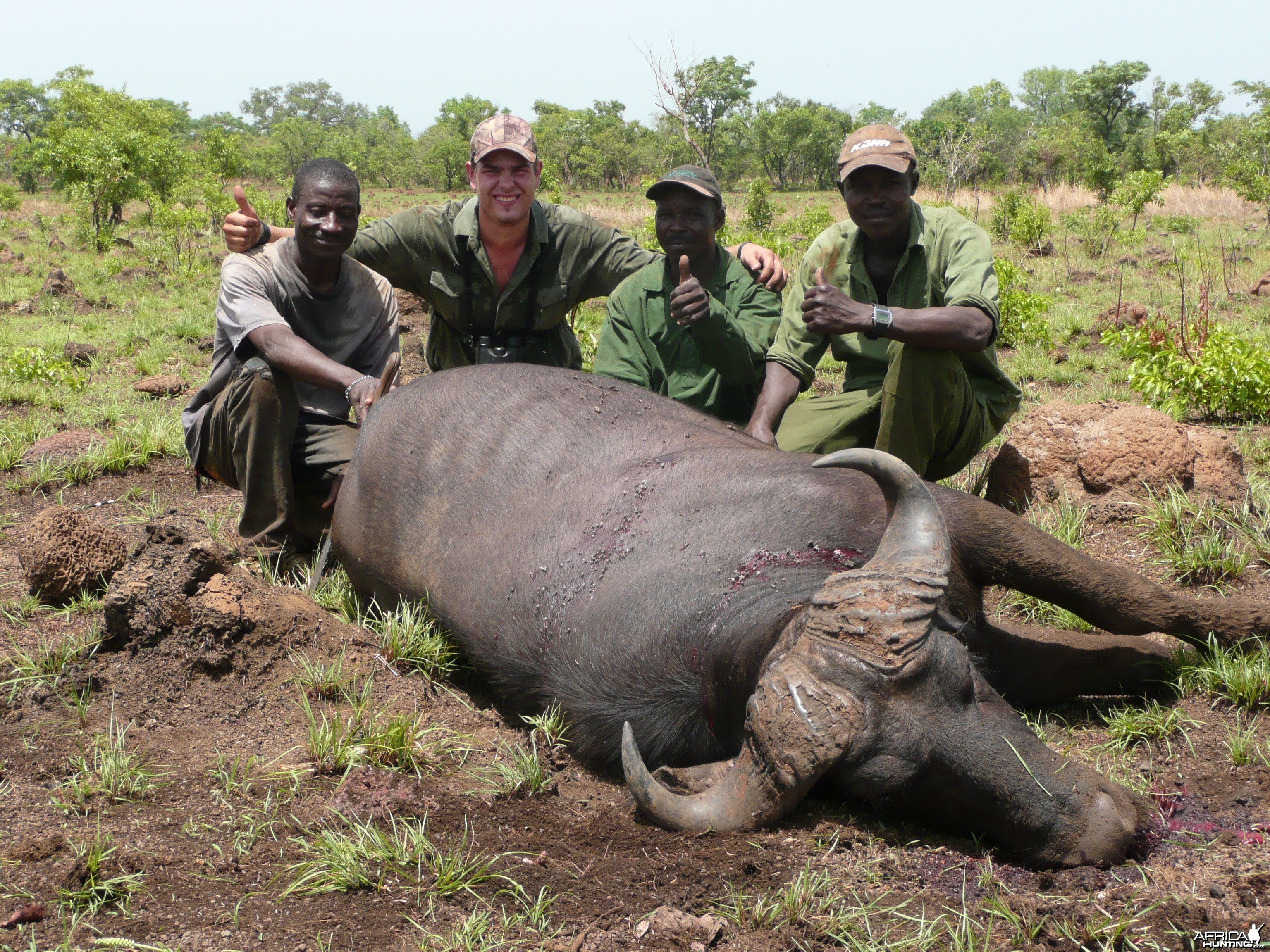 Old Buffalo hunted in CAR with Central African Wildlife Adventures