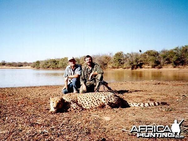 Cheetah Hunting in Namibia