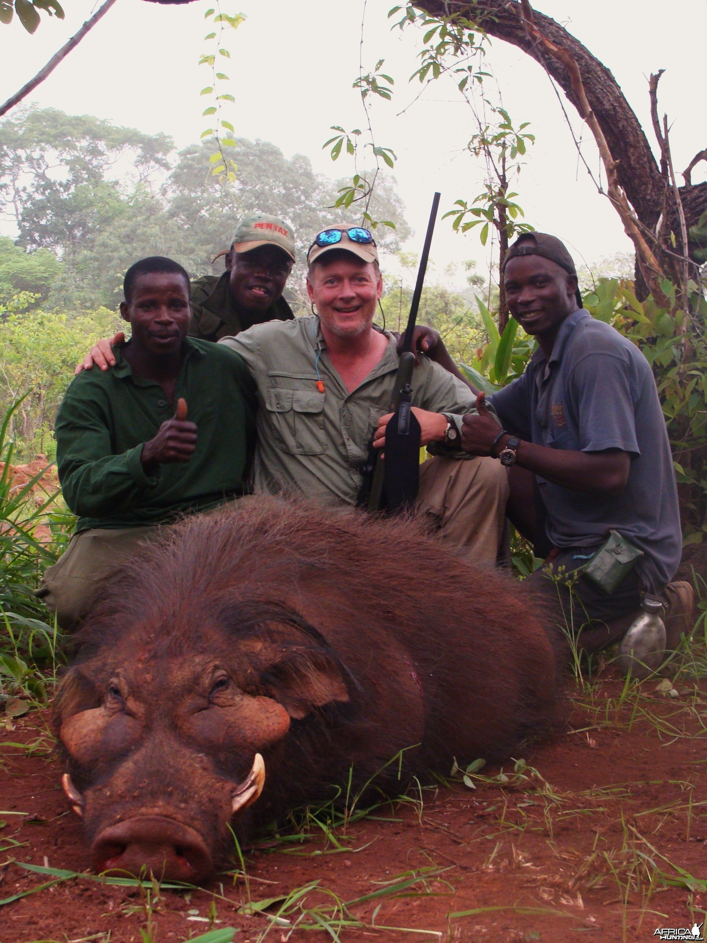 Very old Giant Forest Hog hunted in CAR with Central African Wildlife Adven