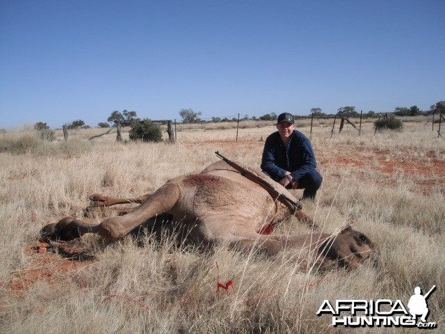 Hunting Camel in Australia