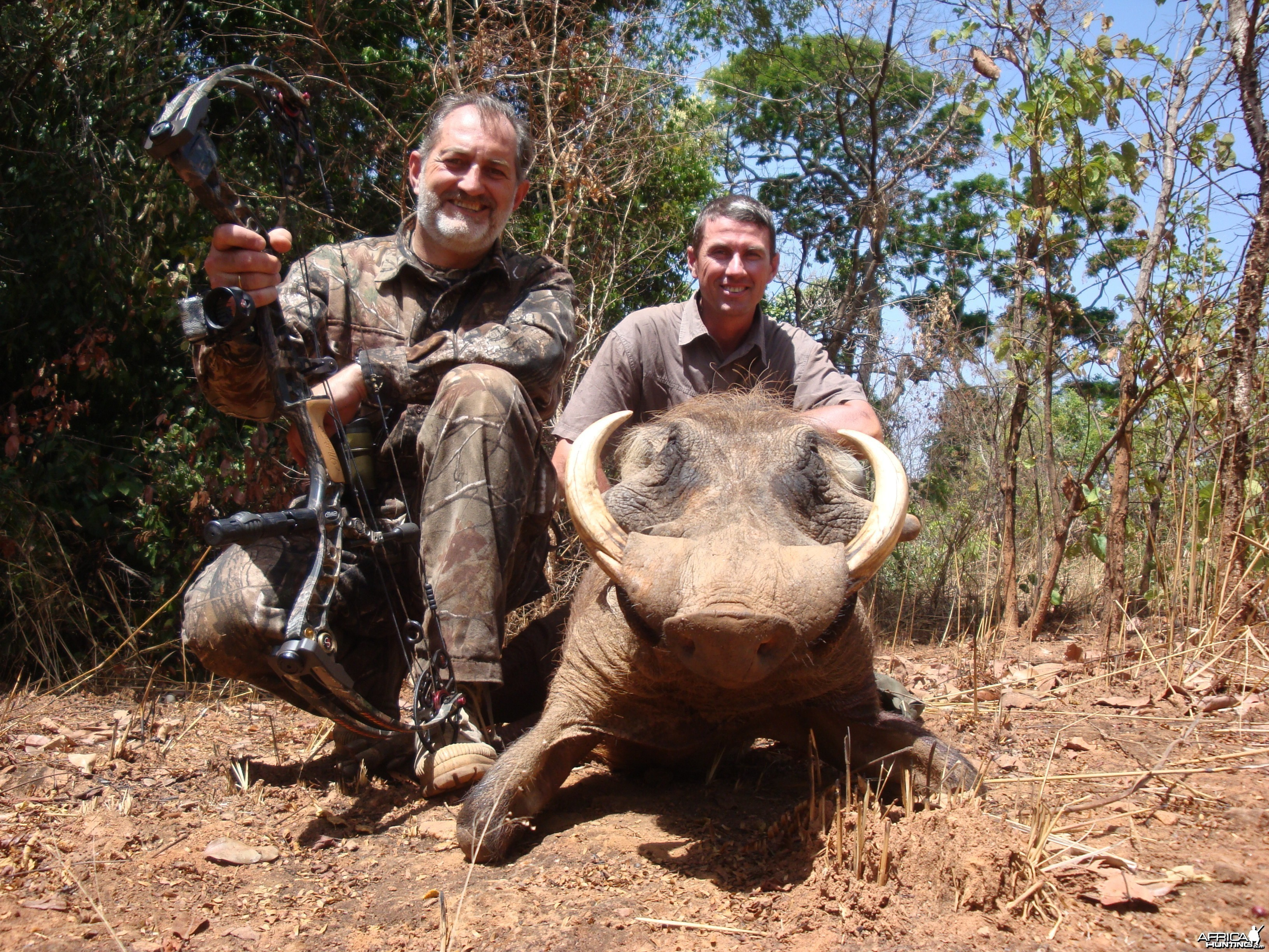 Warthog bowhunted in CAR with Central African Wildlife Adventures