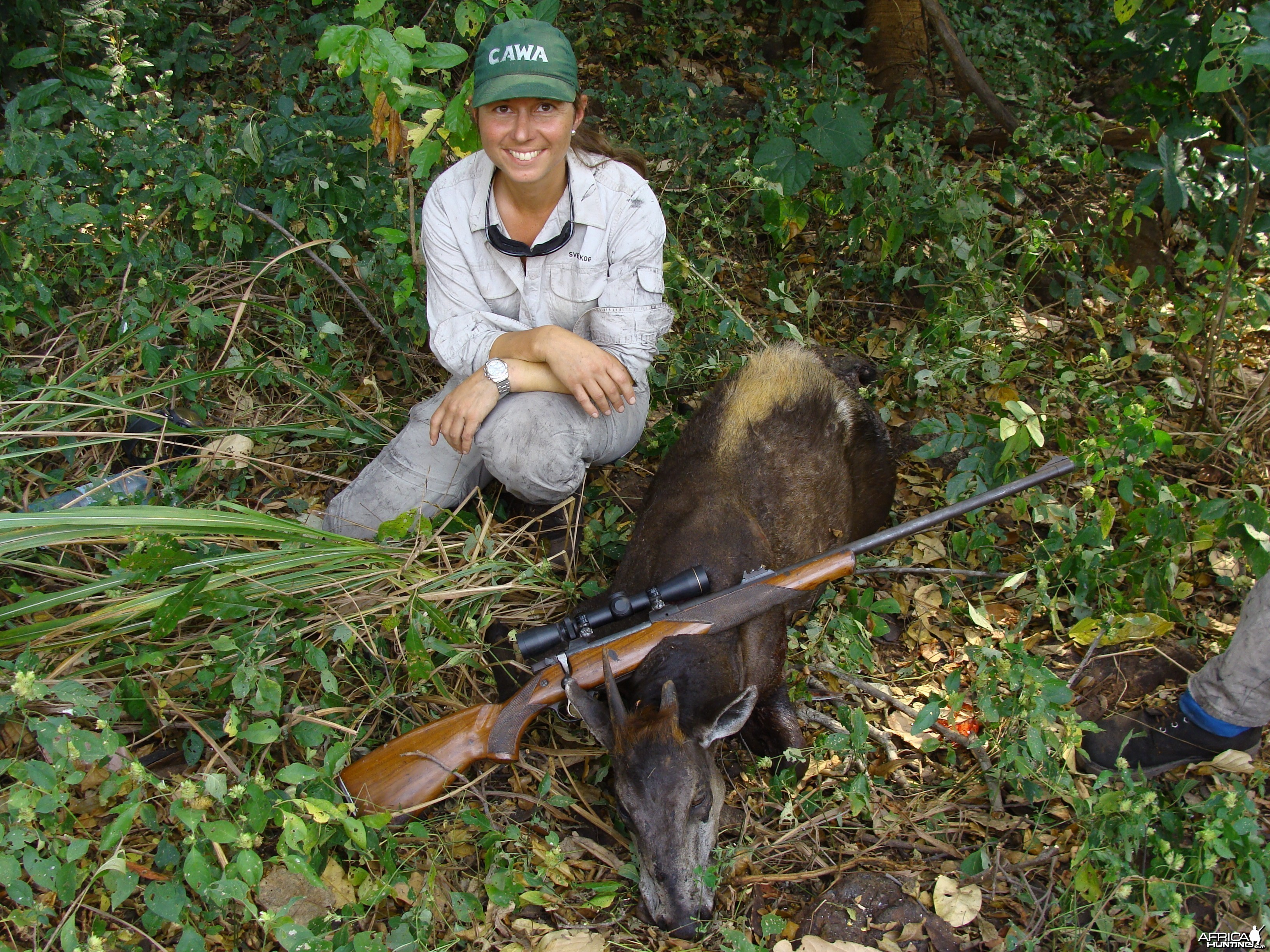 Yellow Back Duiker hunted in CAR with Central African Wildlife Adventures