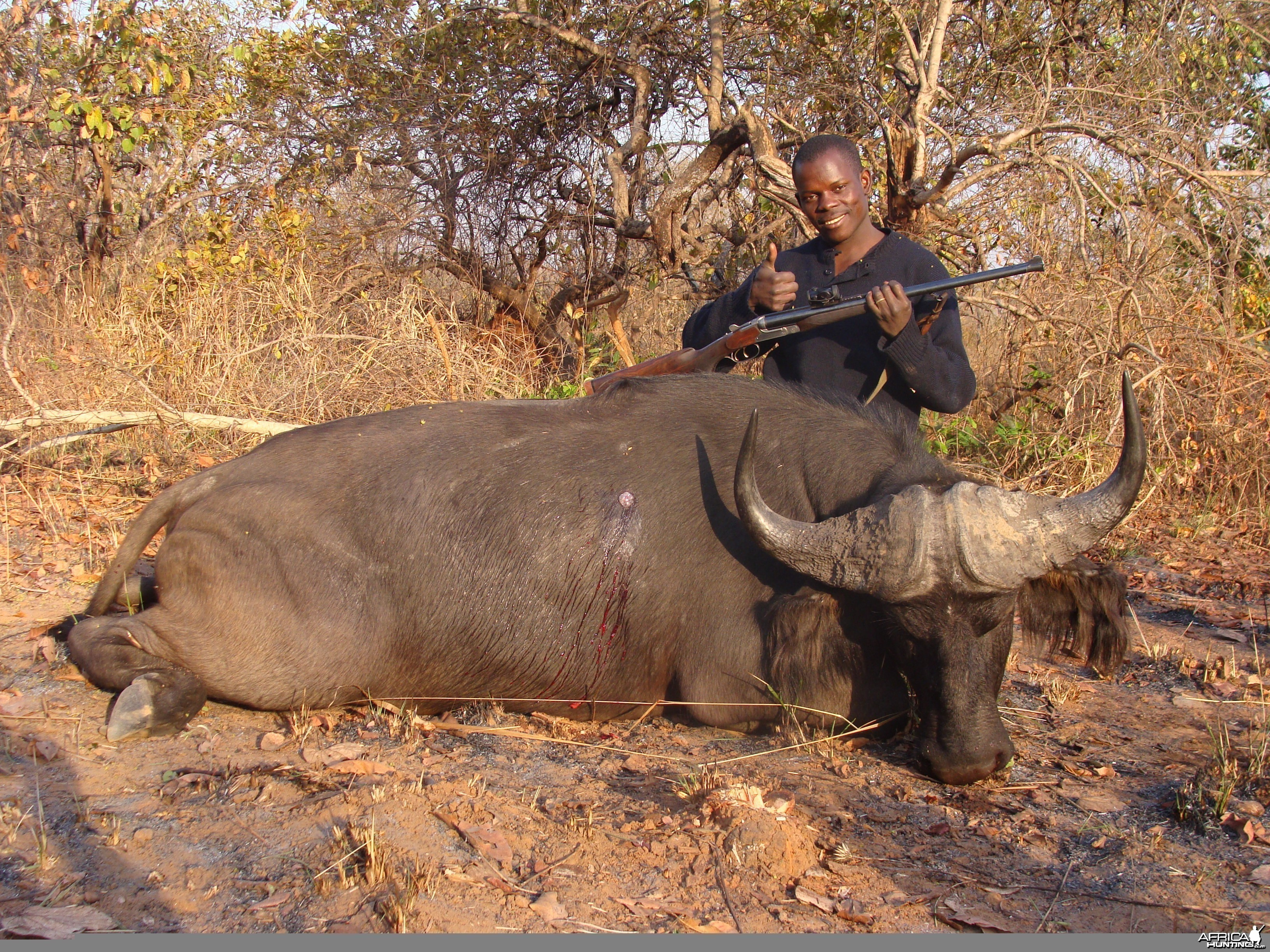 Buffalo hunted in CAR with Central African Wildlife Adventures