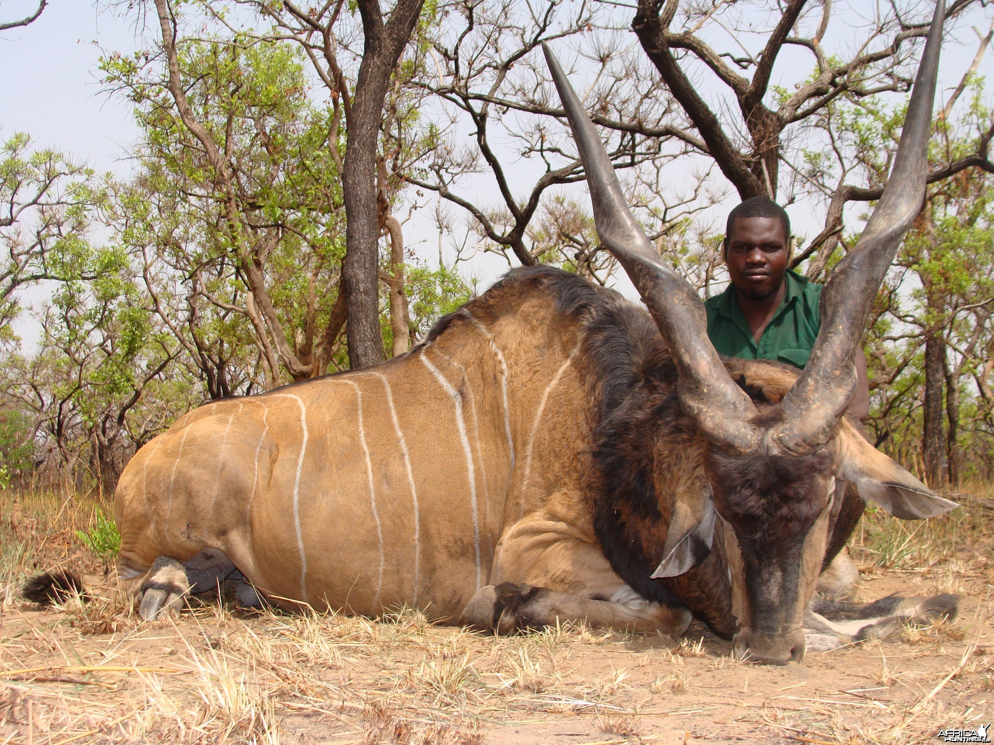 Lord Derby Eland hunted in Central African Republic with CAWA