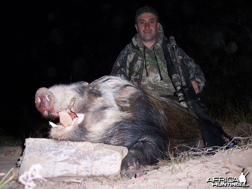Hunting Bushpig with KMG Hunting Safaris
