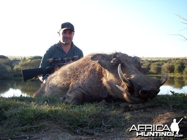 Hunting Warthog with KMG Hunting Safaris