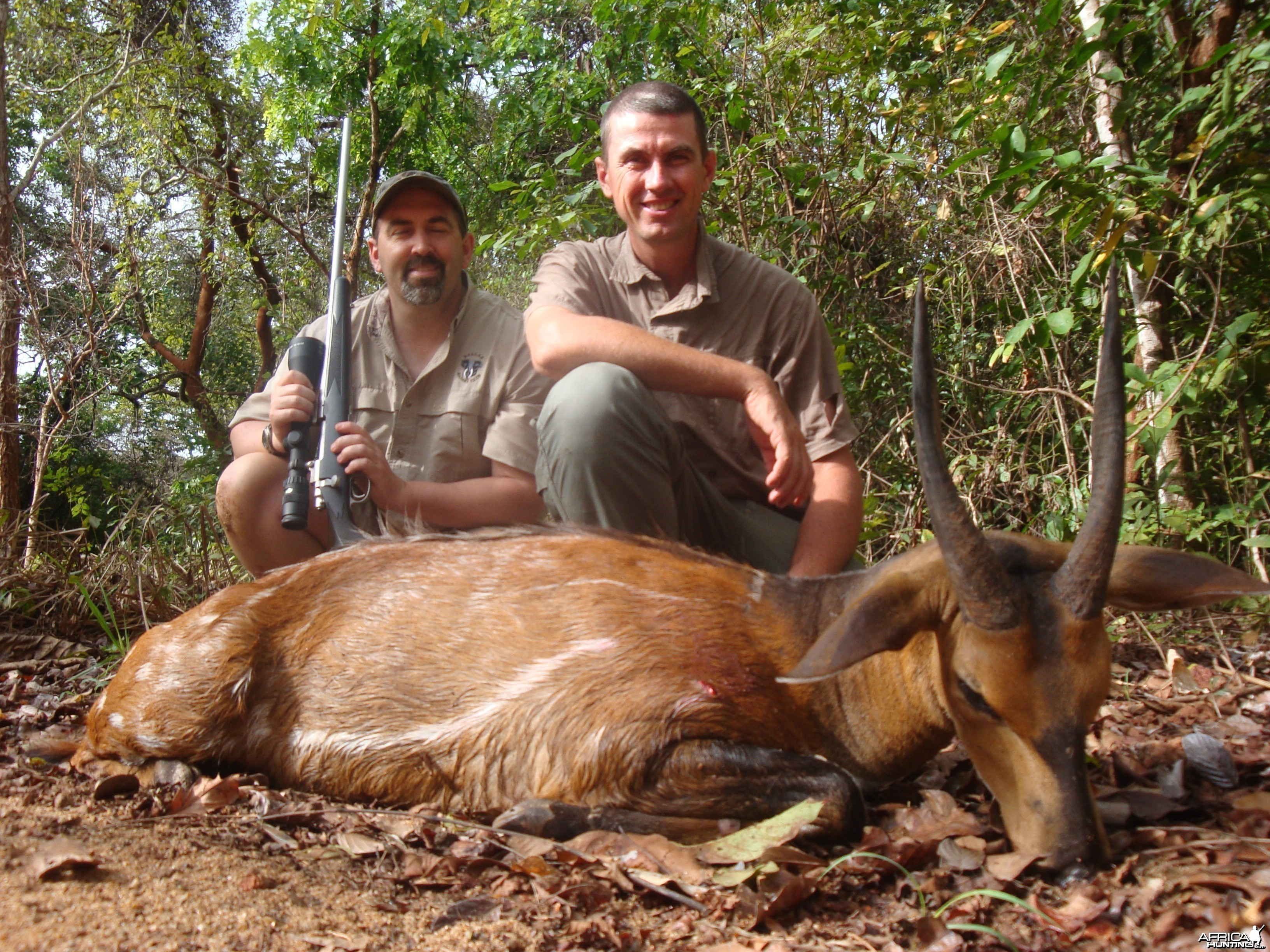 Bushbuck hunted in CAR with Central African Wildlife Adventures