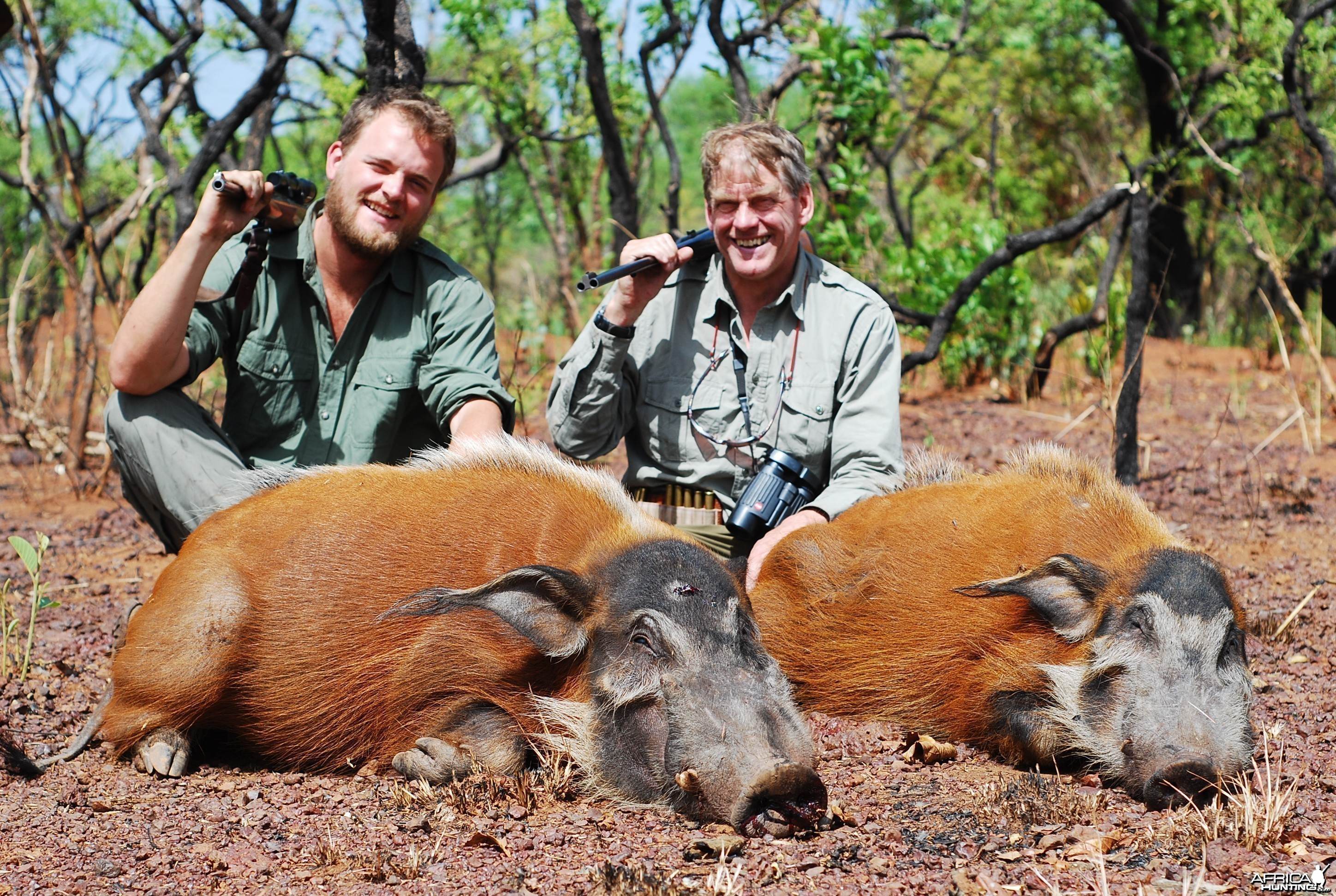 Red River Hogs hunted in CAR with CAWA