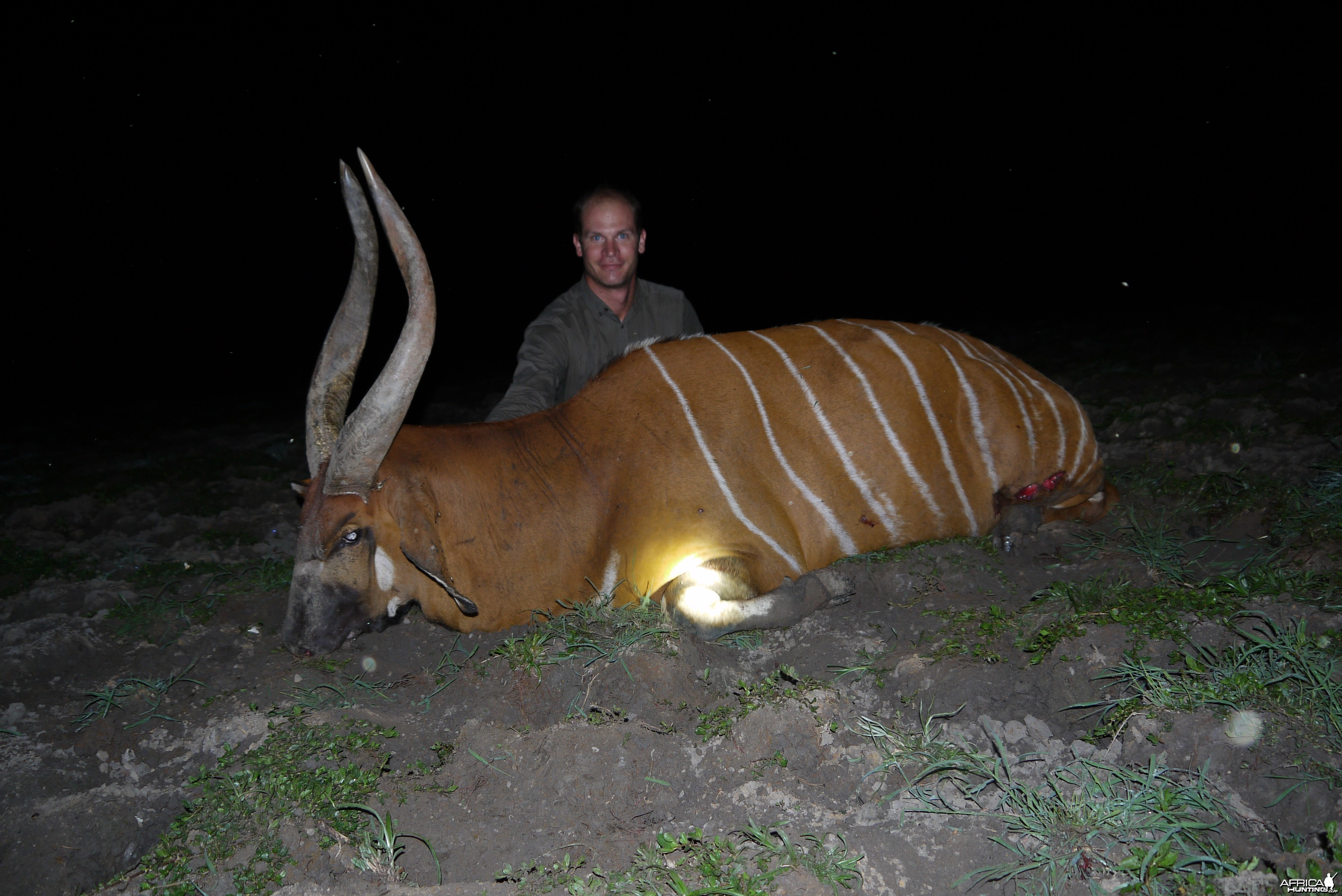 Bongo hunted in CAR with CAWA