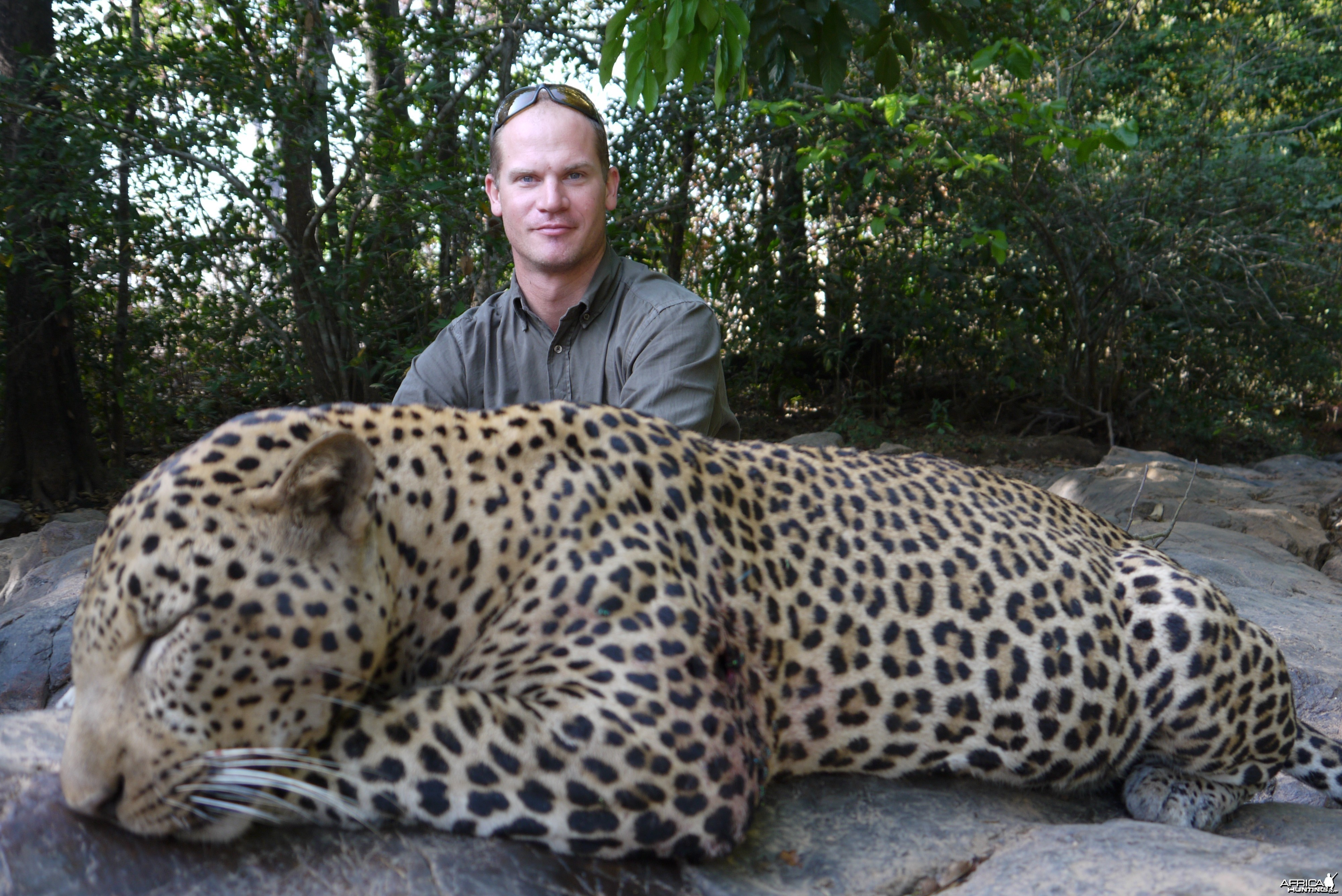Leopard hunted in Central African Republic with CAWA