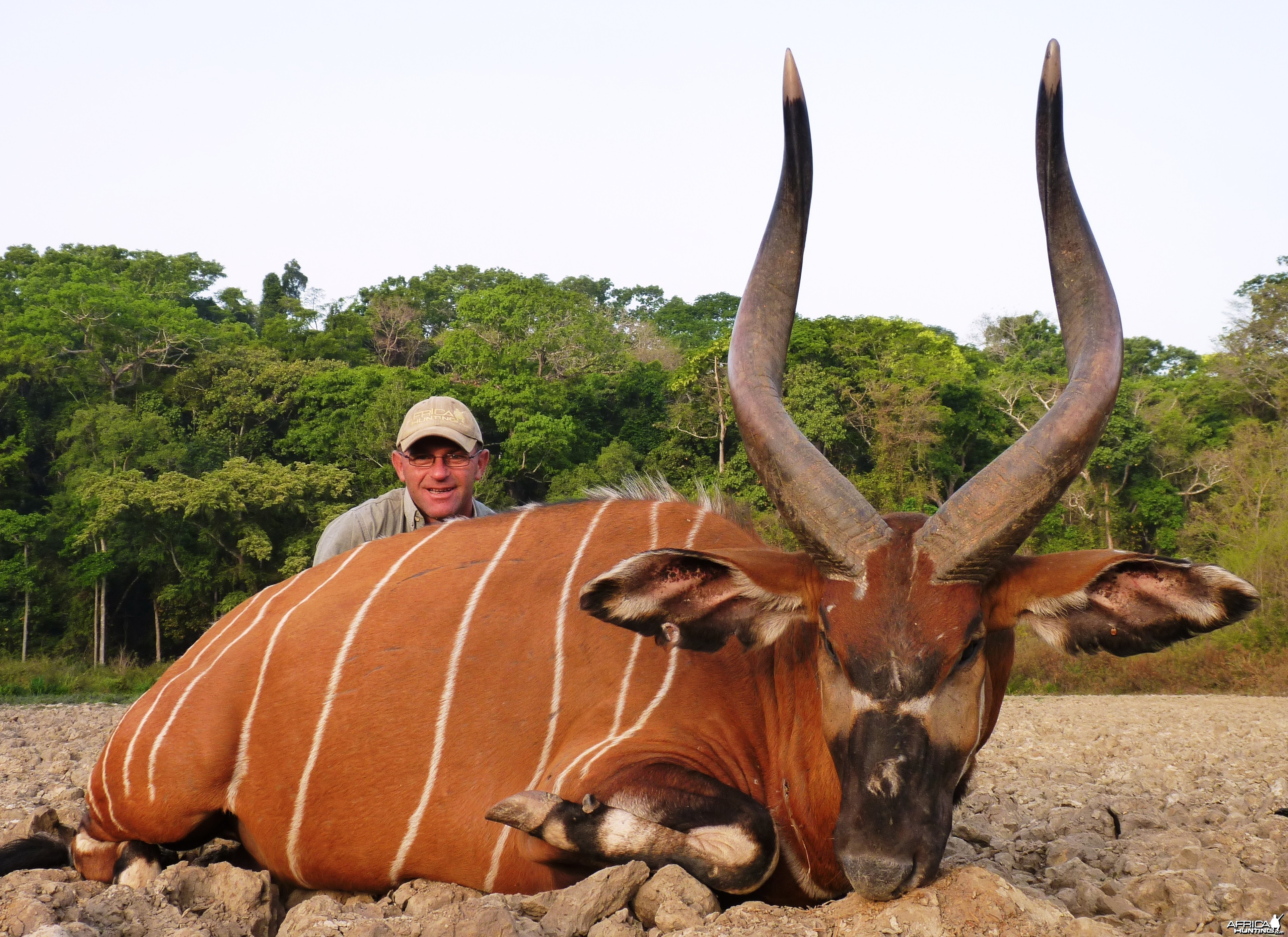 Bongo hunted in CAR with Central African Wildlife Adventures