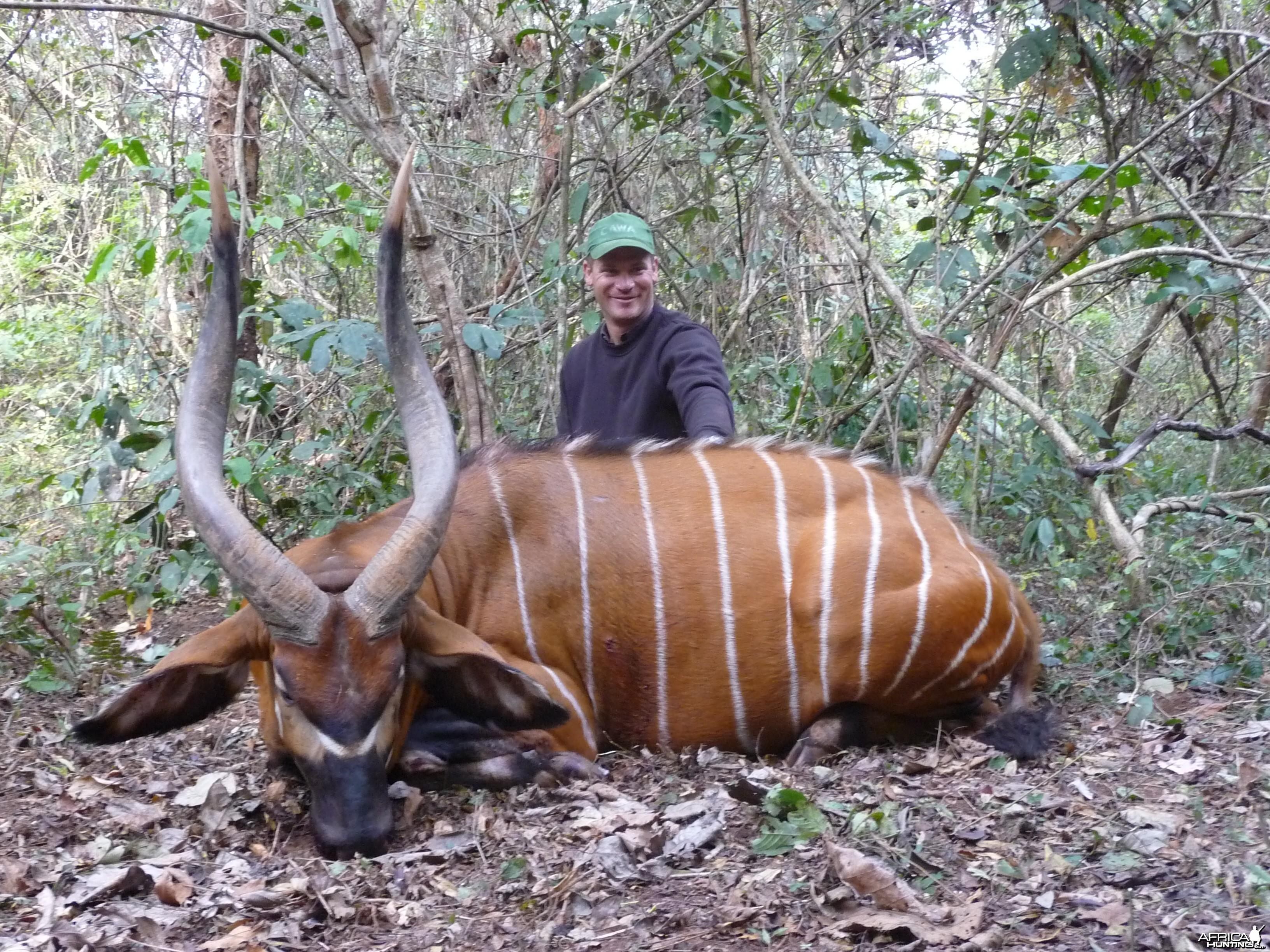 Bongo hunted in CAR with CAWA