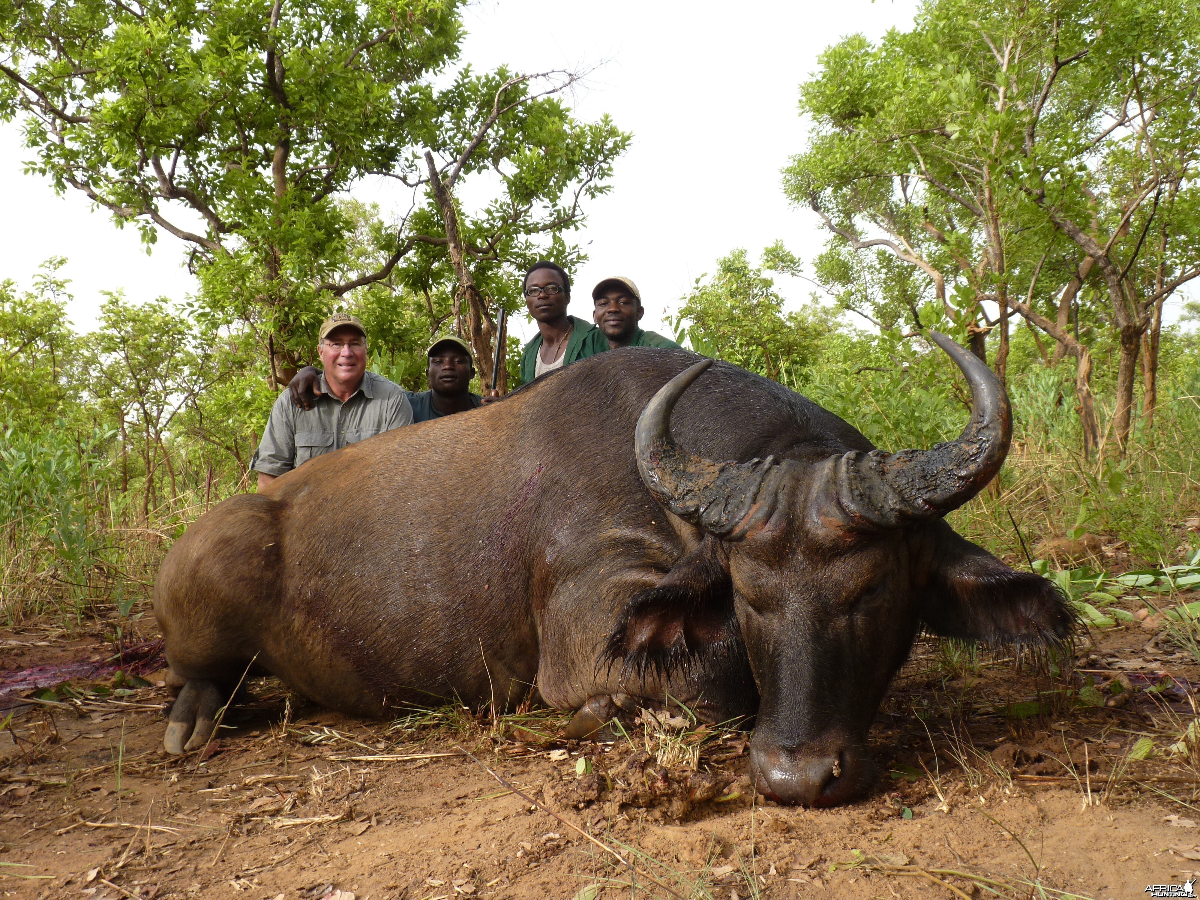 Buffalo hunted in Central African Republic with CAWA