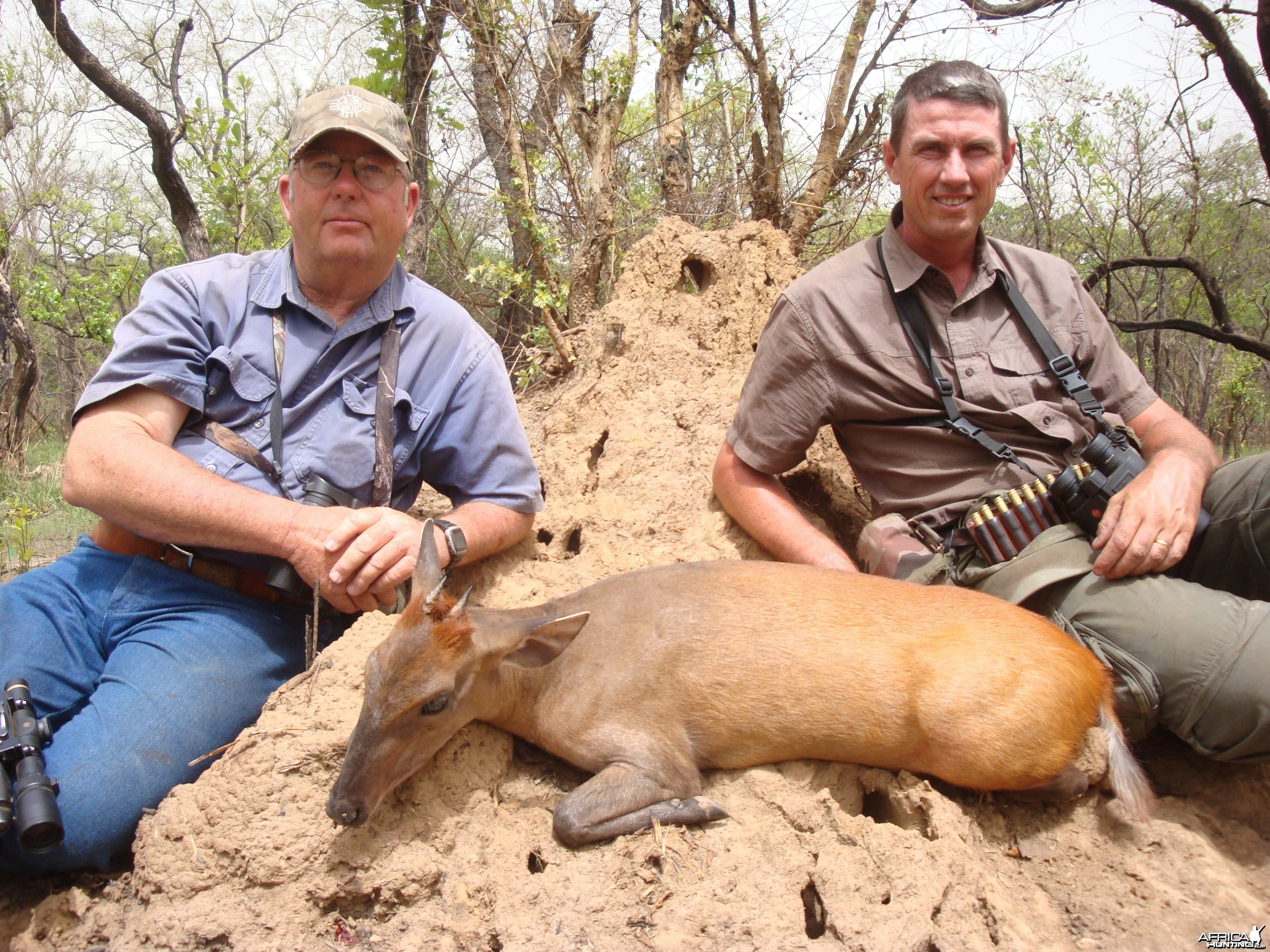 Weyns Duiker hunted in CAR with CAWA