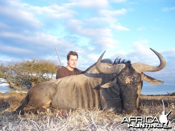 Blue Wildebeest Limpopo South Africa