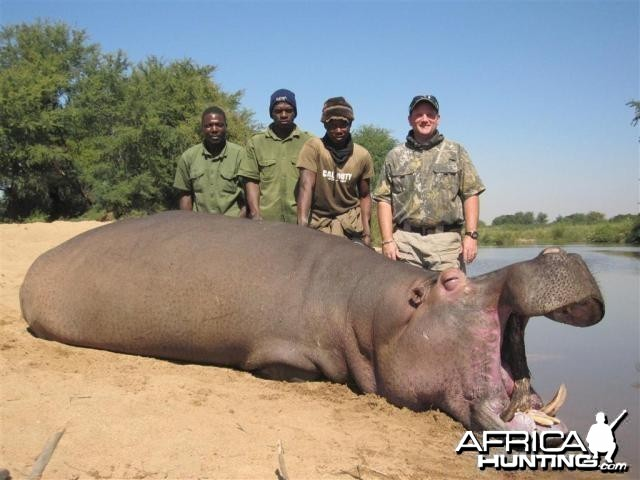 Hippo Hunt in Save Valley Conservancy Zimbabwe
