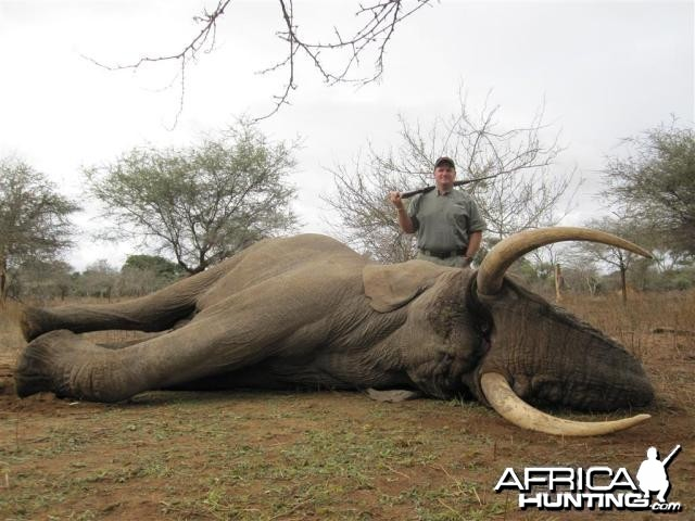 Elephant Hunt in Save Valley Conservancy Zimbabwe