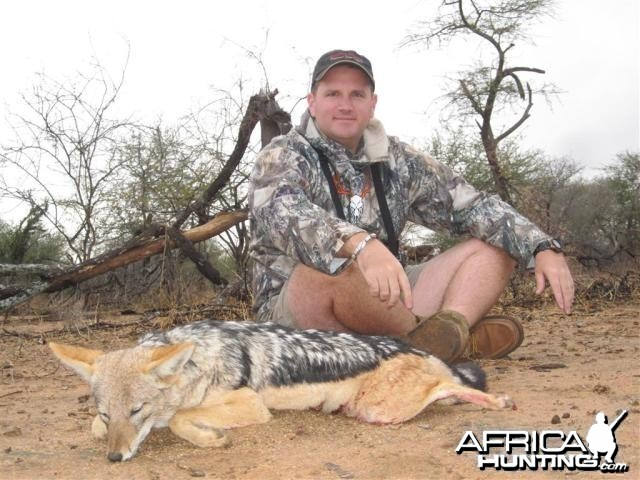 Jackal Hunt in Save Valley Conservancy Zimbabwe