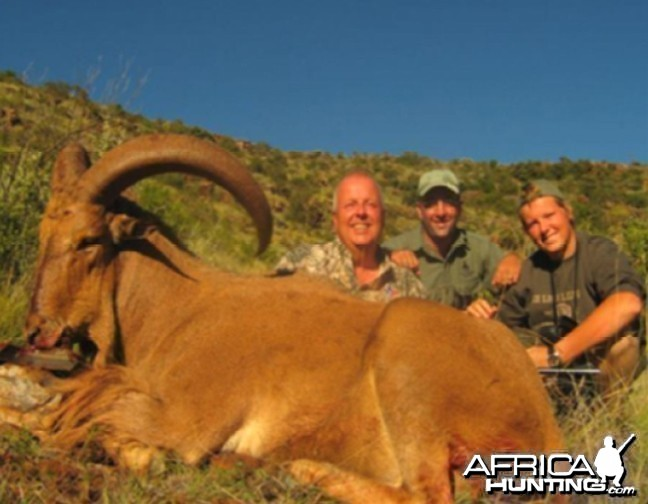 Hunting Barbary Sheep with Wintershoek Johnny Vivier Safaris in SA