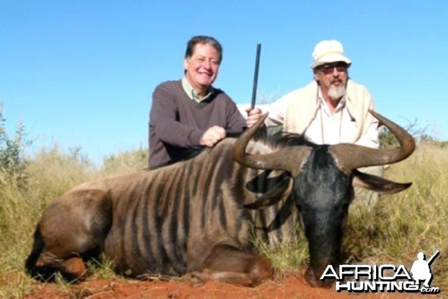 Hunting Blue Wildebeest with Wintershoek Johnny Vivier Safaris in SA