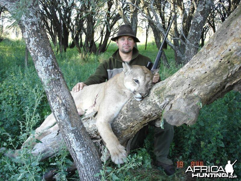 Puma Hunting in Argentina