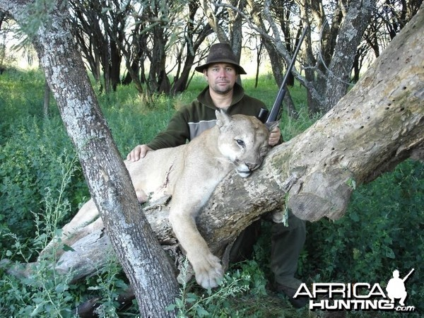 678d393a7162 Puma Hunting in Argentina - My Photo Gallery