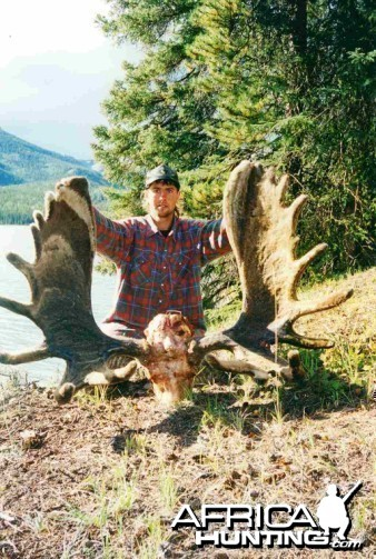 1999 Burnt Rose Moose