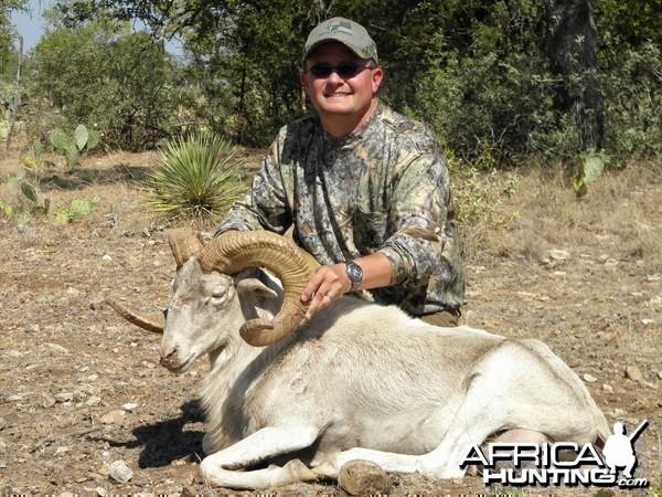 Texas Dall Ram - 2011