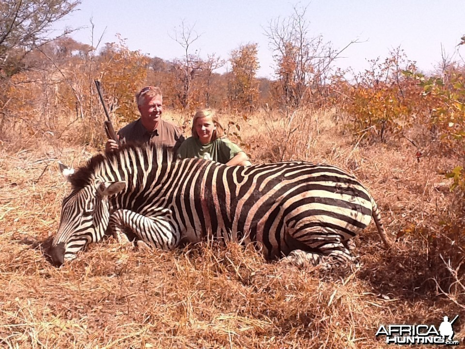 Zebra hunted in Zimbabwe