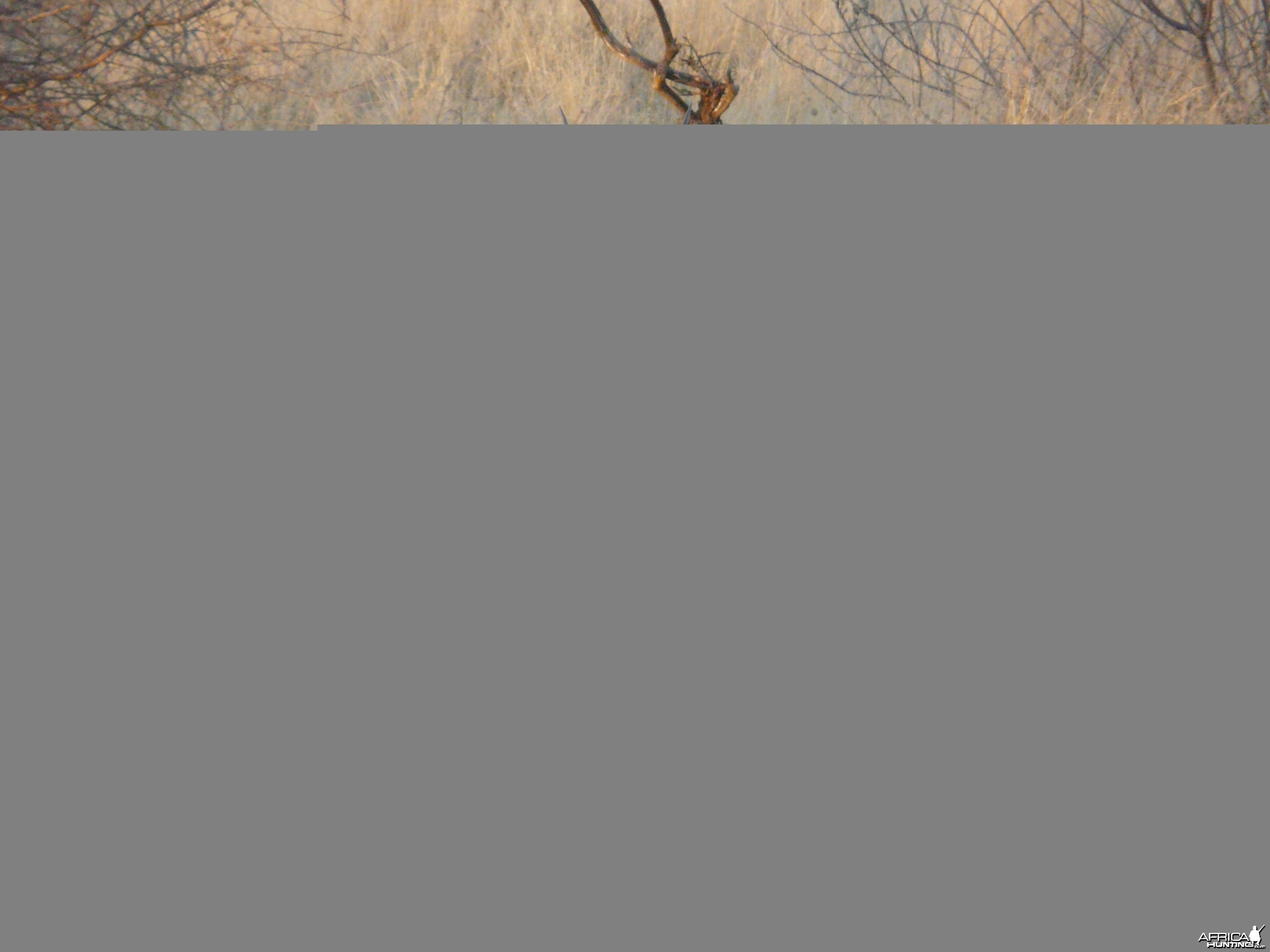 Oryx - Namibia - July 2011