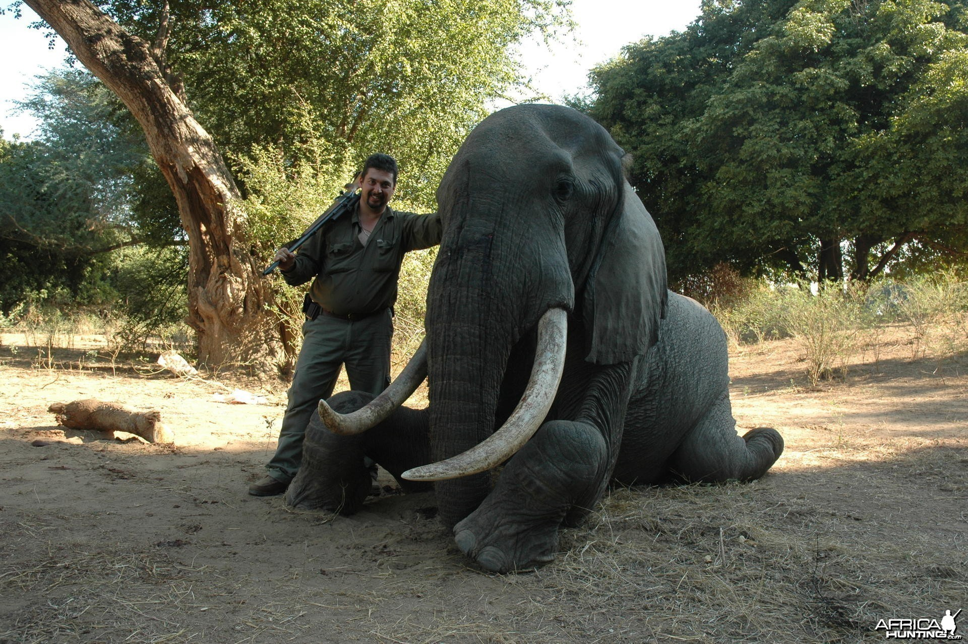 40/41 pounds Elephant hunted in Zimbabwe