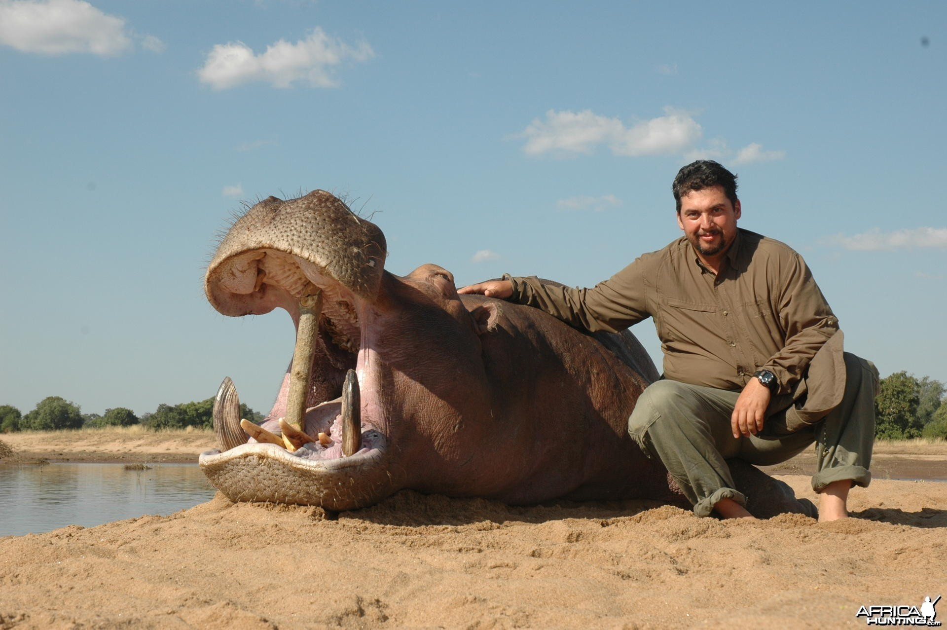 Hippo hunted in Zimbabwe