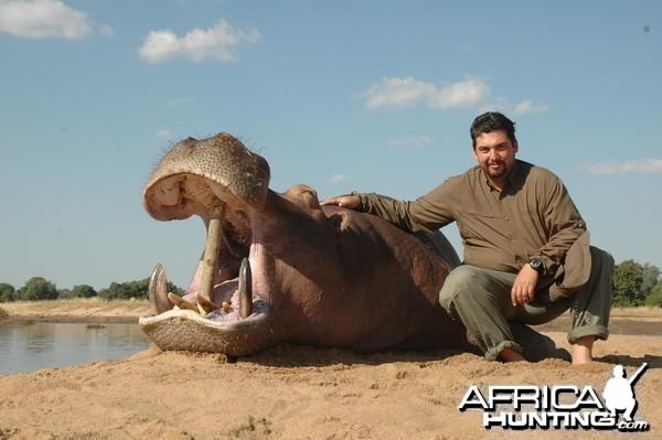 Hippo hunted in Zimbabwe