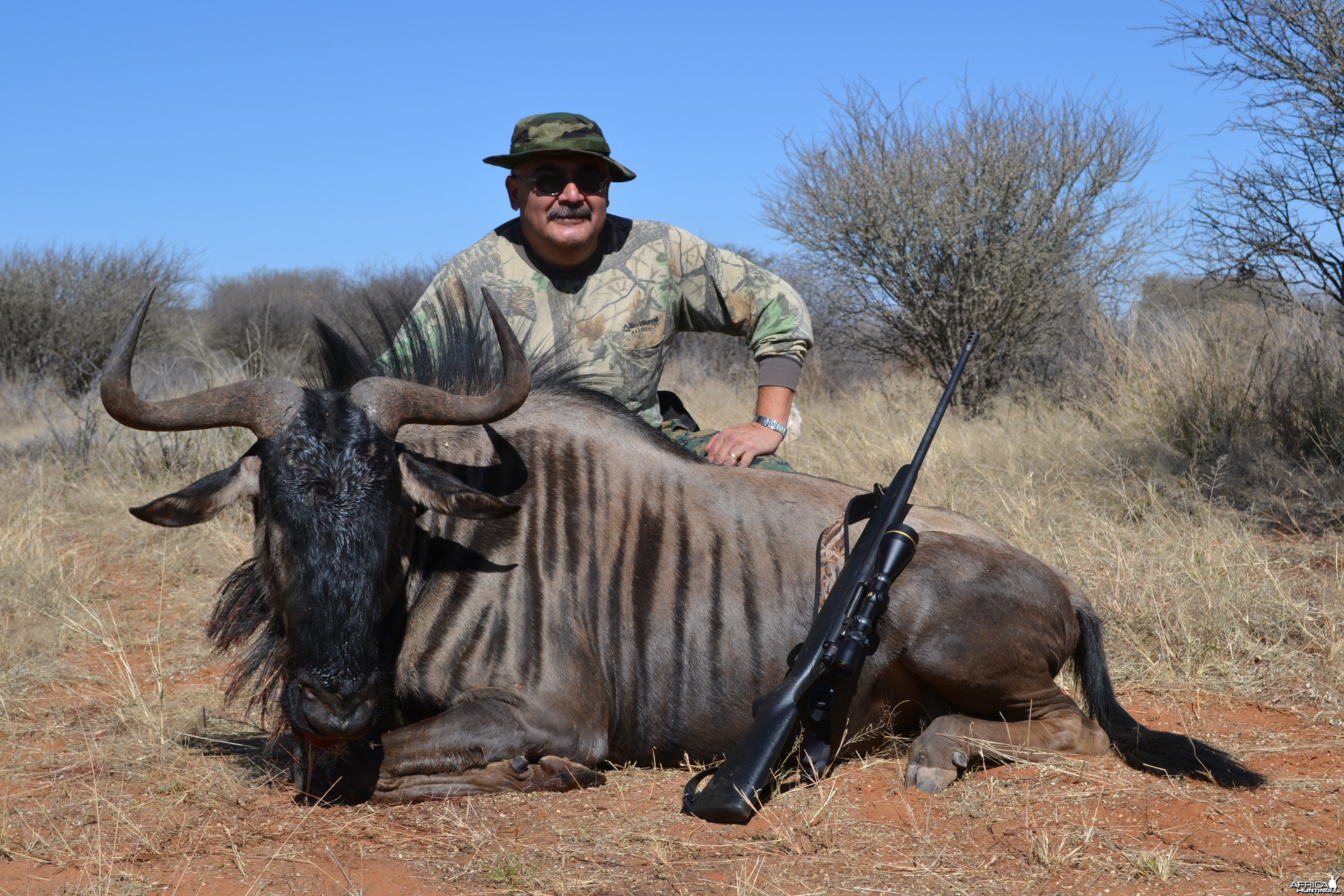 Blue wildebeest trophy harvested with Kowas Hunting Safaris