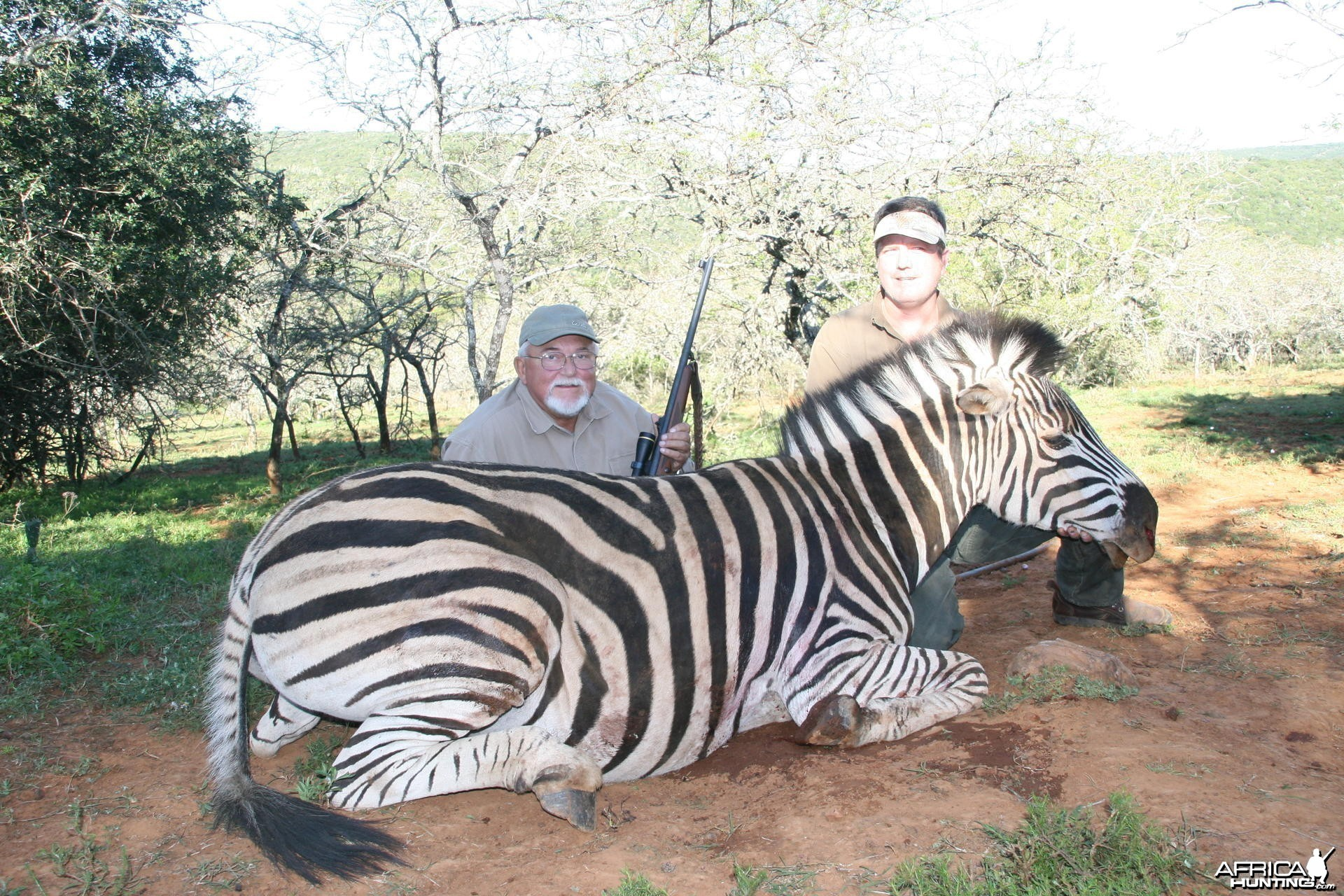 Zebra hunt in South Africa