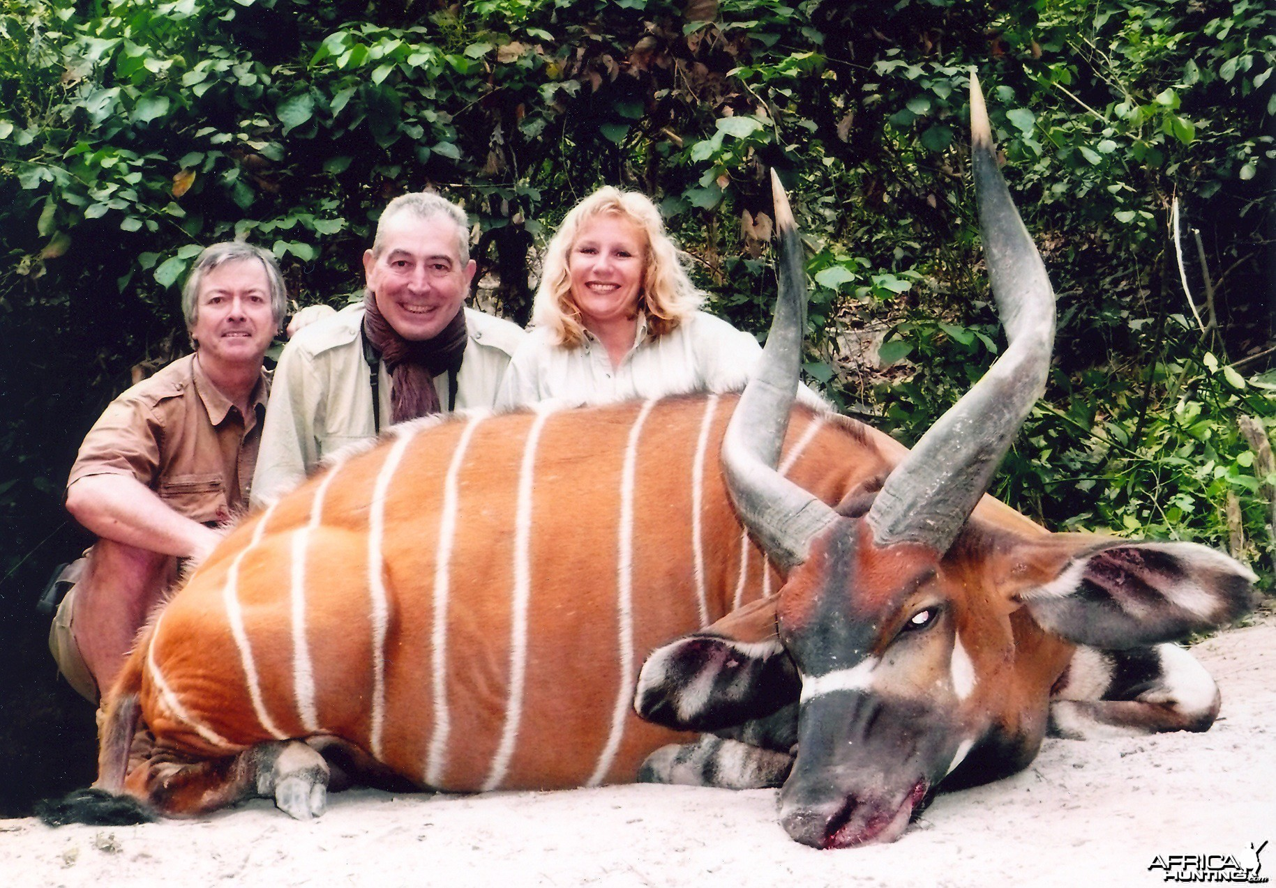 Hunting Bongo in CAR with Rudy Lubin Safaris