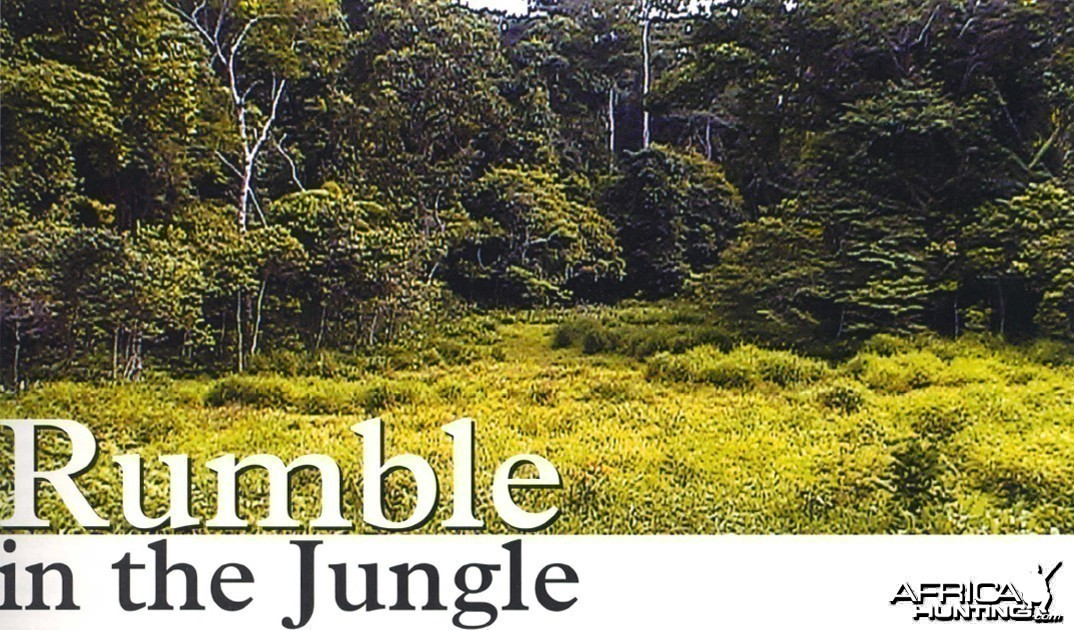 Rumble in the Jungle by Chris Storm