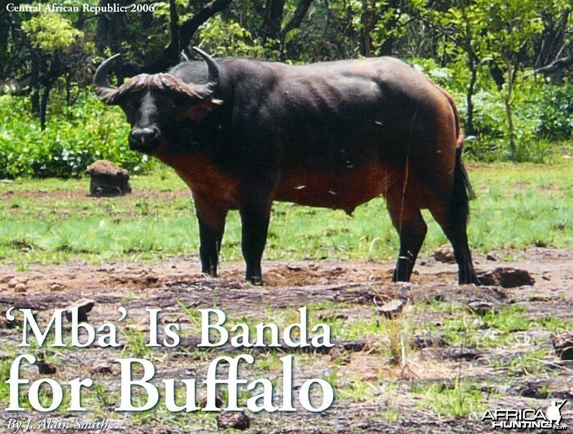 'Mba' Is Banda for Buffalo by J. Alain Smith