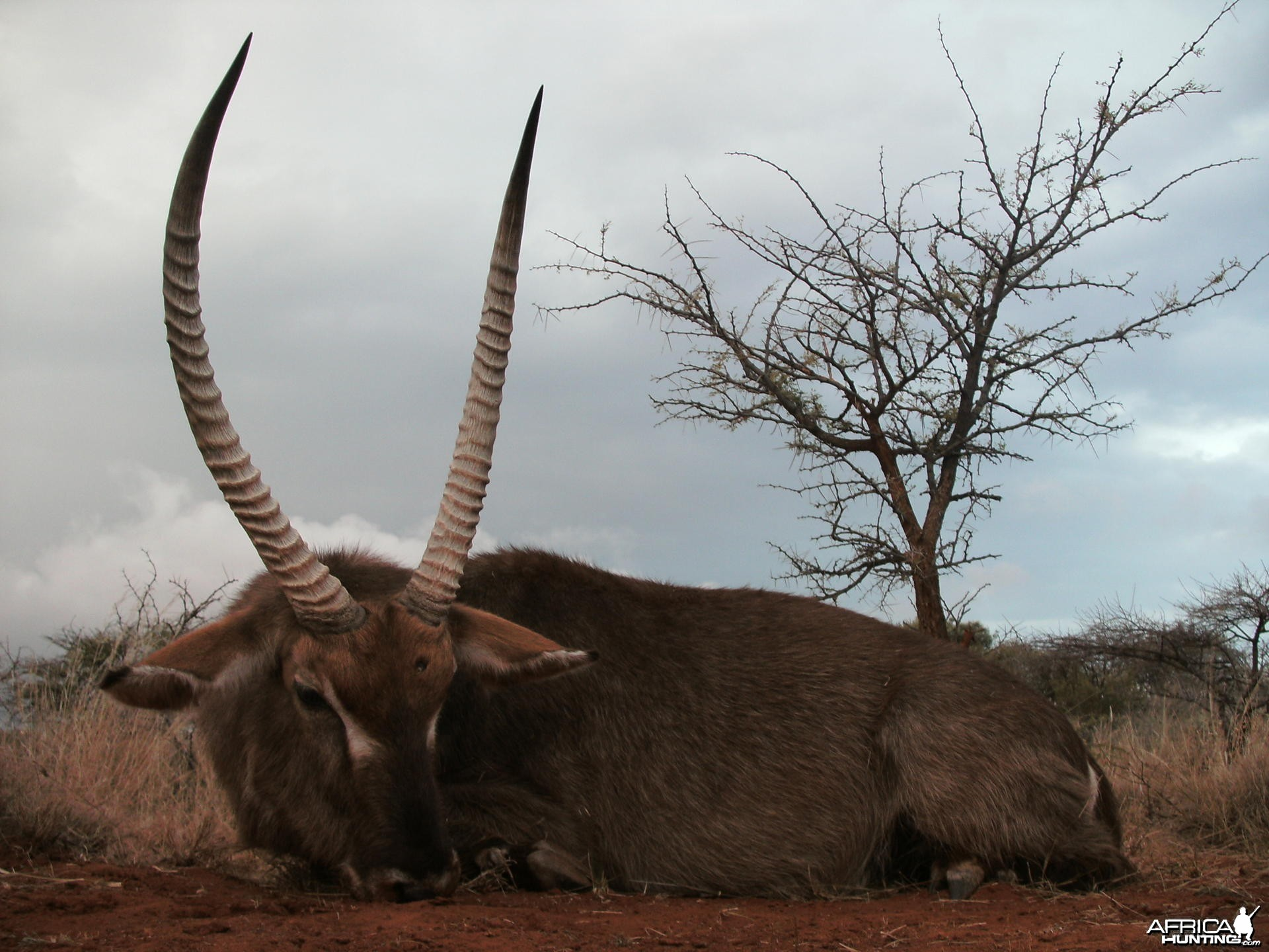 Waterbuck Hunt with HartzView Hunting Safaris in South Africa