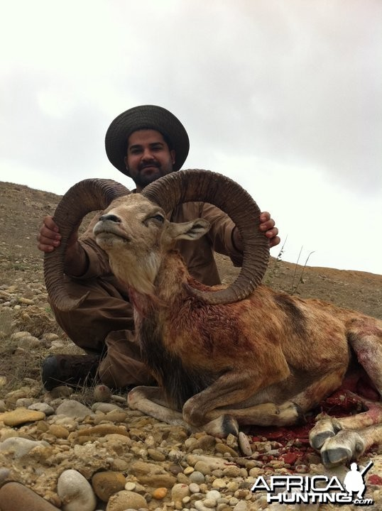Sheep hunt in Pakistan